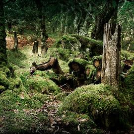 "Durga Garcia, ""Mossy Woods"""