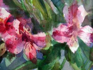 """""""Alstromer"""" by Anita Lovitt"""