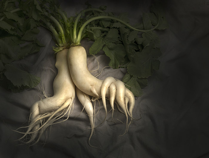 """Daikon Radish"" by Barry Seidman"