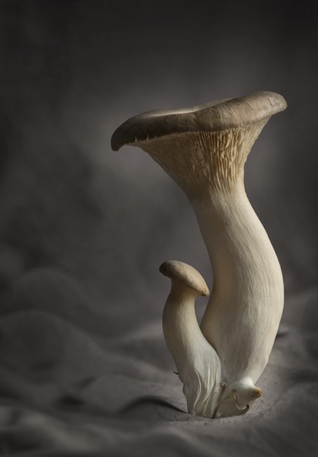 """Tall Mushroom"" by Barry Seidman"